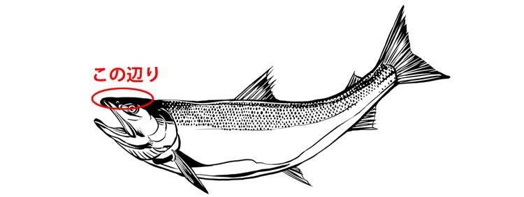 鮭の鼻軟骨